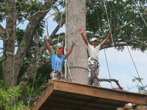 Building the tree house